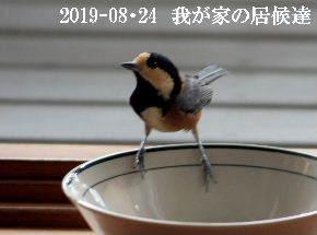 2019-08・24 我が家の居候達・・・ (3).JPG