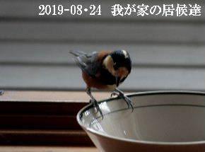 2019-08・24 我が家の居候達・・・ (4).JPG