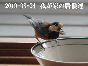 2019-08・24 我が家の居候達・・・ (6).JPG