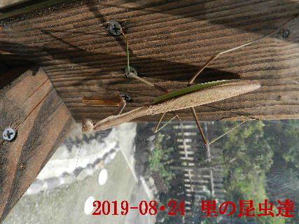 2019-08・24 里の昆虫達.JPG