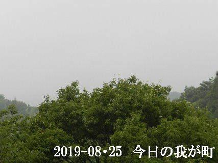 2019-08・25 今日の我が町.JPG