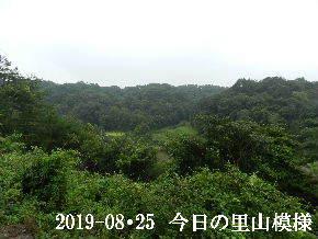 2019-08・25 今日の里山模様・・・ (3).JPG