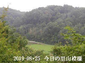 2019-08・25 今日の里山模様・・・ (4).JPG