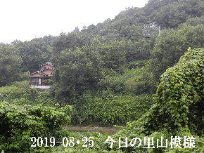 2019-08・25 今日の里山模様・・・ (5).JPG
