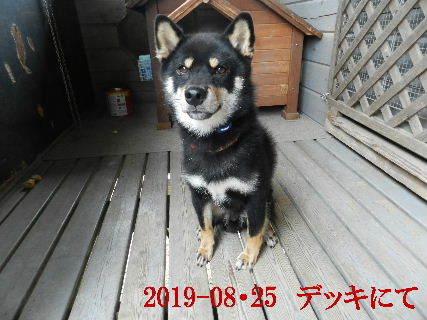 2019-08・25 今日の麻呂 (1).JPG