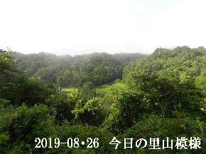 2019-08・26 今日の里山模様・・・ (3).JPG