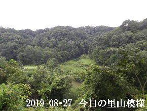 2019-08・27 今日の里山模様・・・ (3).JPG