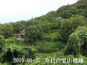 2019-08・27 今日の里山模様・・・ (5).JPG