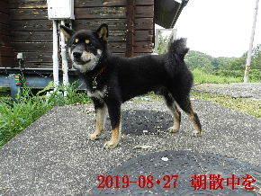 2019-08・27 今日の麻呂 (5).JPG