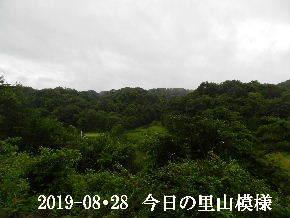 2019-08・28 今日の里山模様・・・ (3).JPG