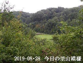 2019-08・28 今日の里山模様・・・ (4).JPG