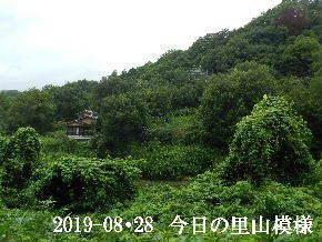 2019-08・28 今日の里山模様・・・ (5).JPG