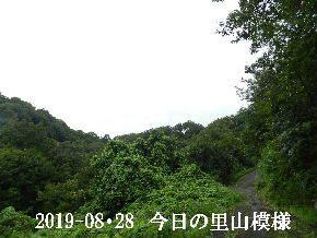 2019-08・28 今日の里山模様・・・ (6).JPG