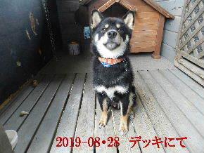2019-08・28 今日の麻呂 (2).JPG