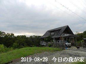 2019-08・29 今日の里山模様・・・ (1).JPG