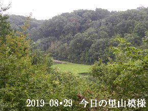 2019-08・29 今日の里山模様・・・ (4).JPG