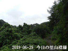2019-08・29 今日の里山模様・・・ (5).JPG