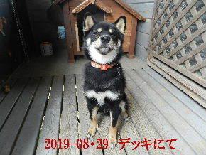2019-08・29 今日の麻呂 (2).JPG