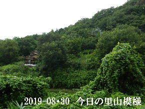 2019-08・30 今日の里山模様・・・ (5).JPG