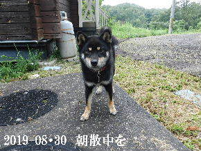 2019-08・30 今日の麻呂 (6).JPG