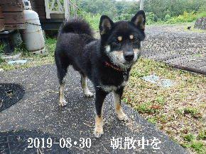 2019-08・30 今日の麻呂 (7).JPG