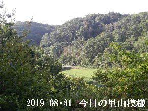 2019-08・31 今日の里山模様・・・ (4).JPG