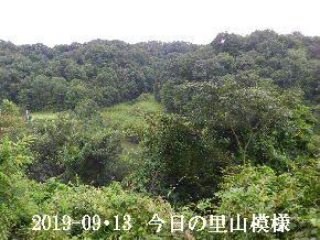 2019-09・13 今日の里山模様・・・ (3).JPG