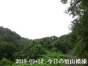 2019-09・13 今日の里山模様・・・ (6).JPG