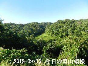 2019-09・15 今日の里山模様・・・ (3).JPG
