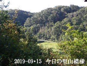 2019-09・15 今日の里山模様・・・ (4).JPG