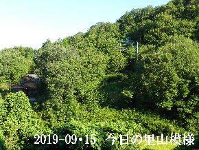 2019-09・15 今日の里山模様・・・ (5).JPG