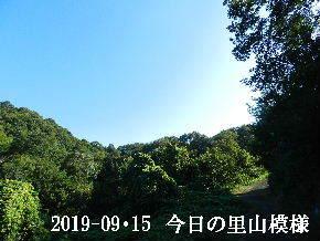 2019-09・15 今日の里山模様・・・ (6).JPG