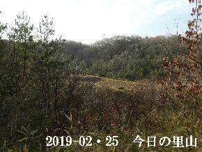 2019―02・25 今日の里山は・・・ (3).JPG