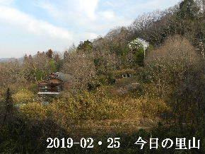 2019―02・25 今日の里山は・・・ (4).JPG