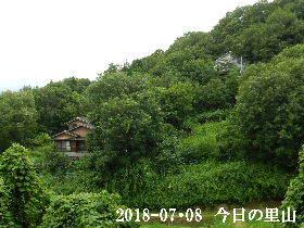 ⅱ018-07・08 今日の里山は・・・ (4).JPG